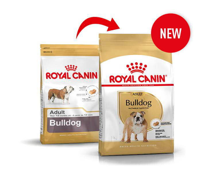 Royal Canin Cane Bulldog Adulto