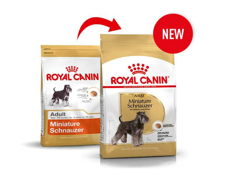Royal Canin Schnauzer Nano Adulto
