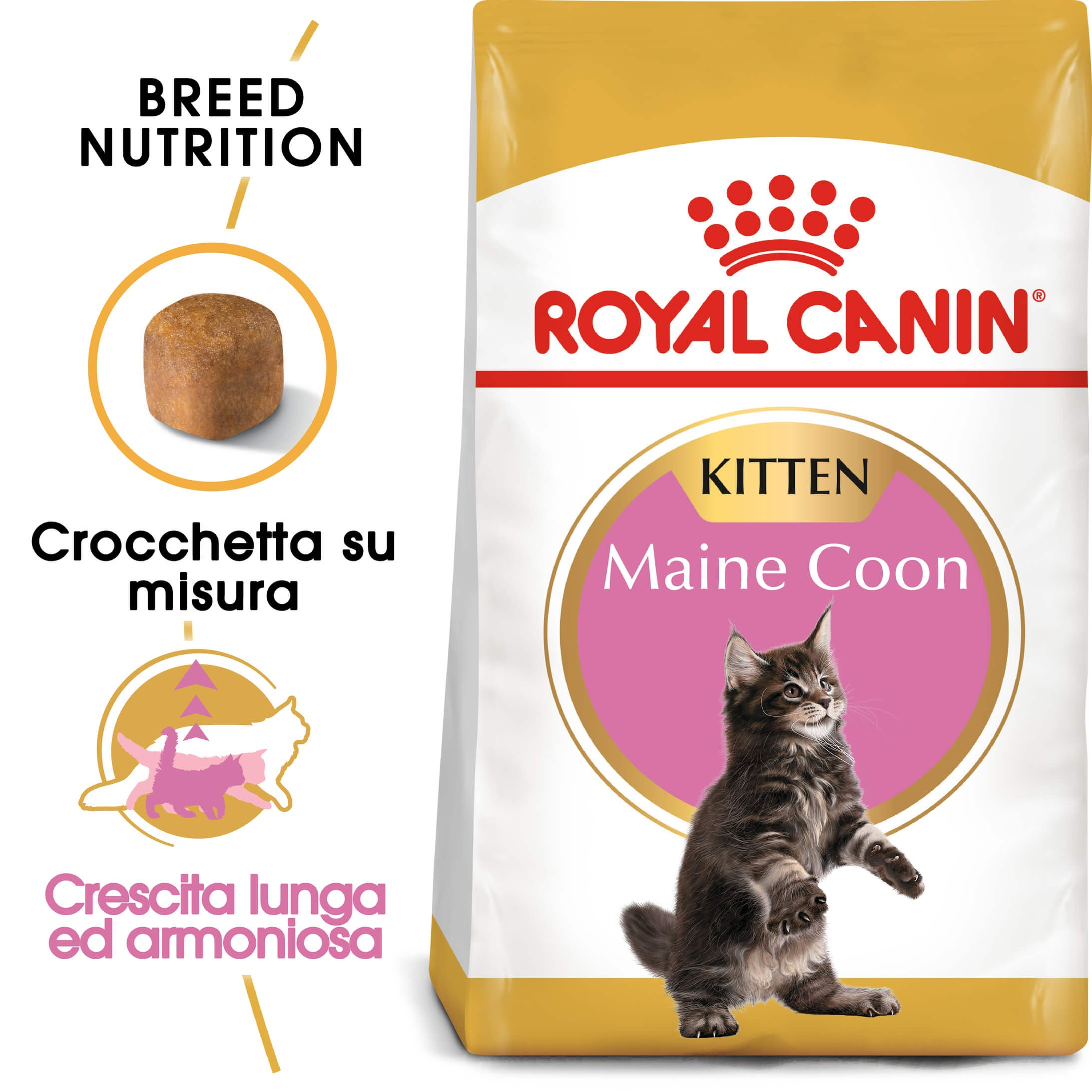 Royal Canin Gattino Maine Coon 36