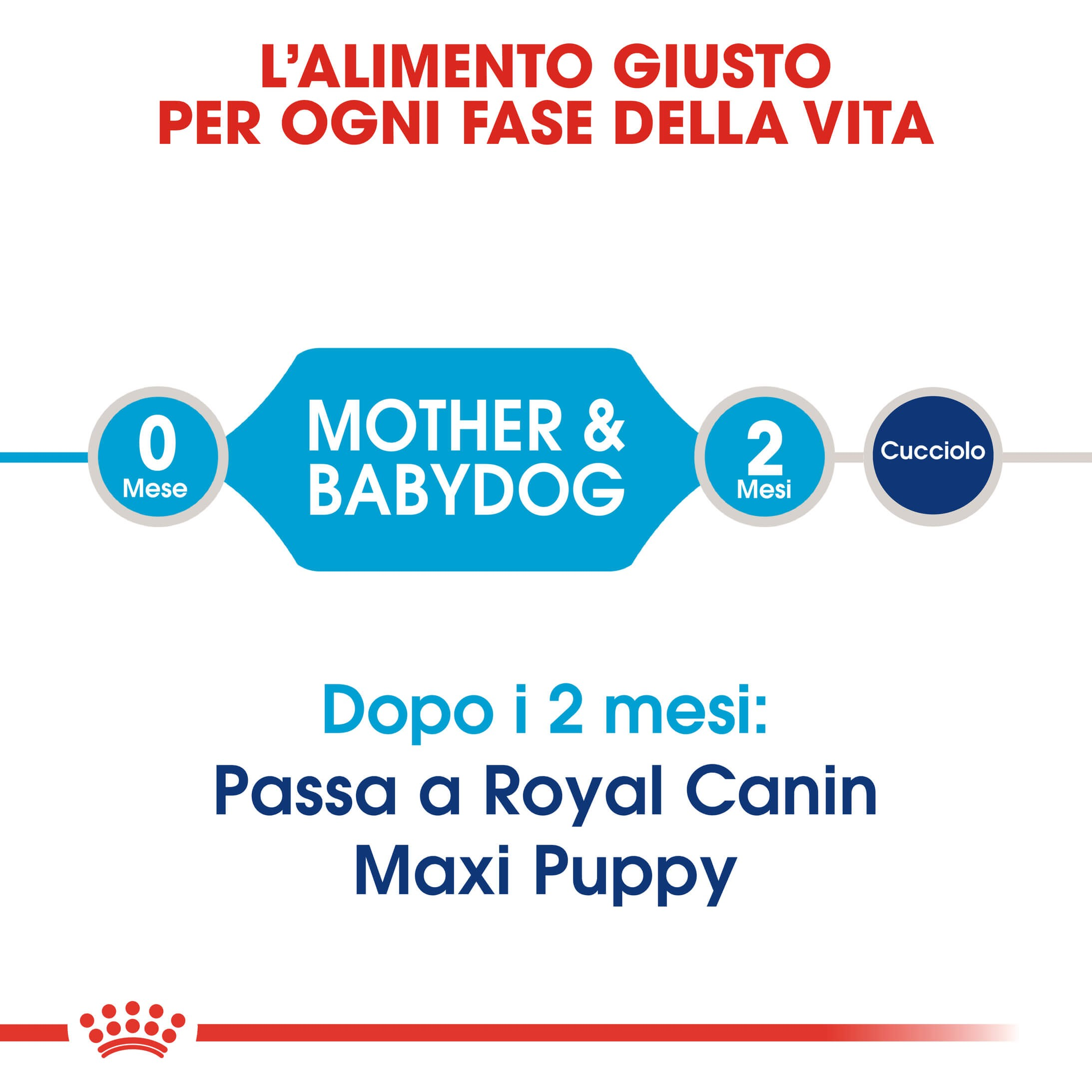 Royal Canin Maxi Starter Mother and Babydog per cane