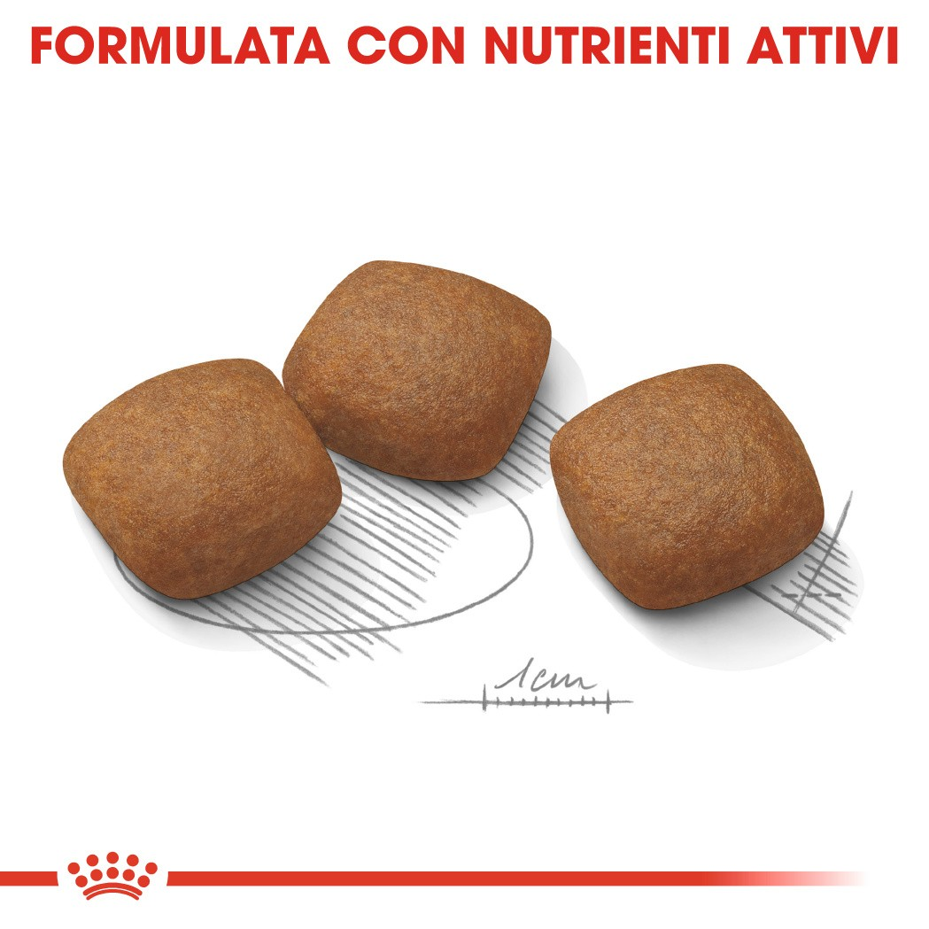Royal Canin Maxi Joint Care per cane