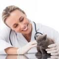 Alimentazione medica gatto